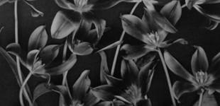 Inspiration | Natural Patterns