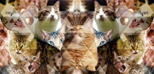 Pattern People Work | Cat Collage! 