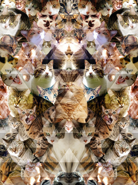 cats 1 Pattern People Work | Cat Collage! 