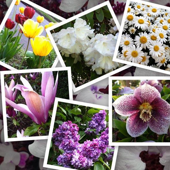 spring-flowers-samples