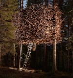 Tree Hotel | Bird&#039;s Nest