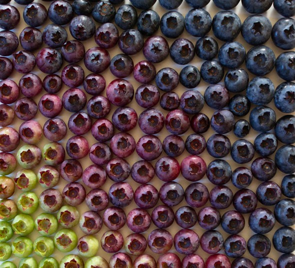 wrightkitchen2 590x536 Edible Art | Food Gradients