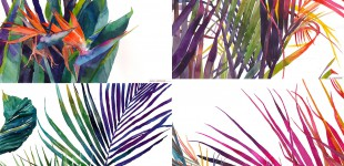 Art | Tropical Watercolors